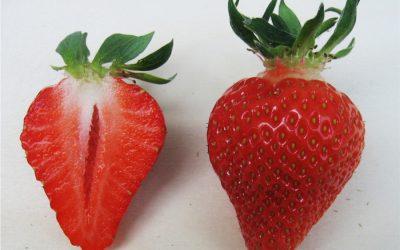 Erdbeersorte Clery