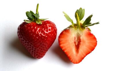 Erdbeersorte Sonsation