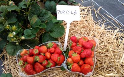 Erdbeersorte Portola